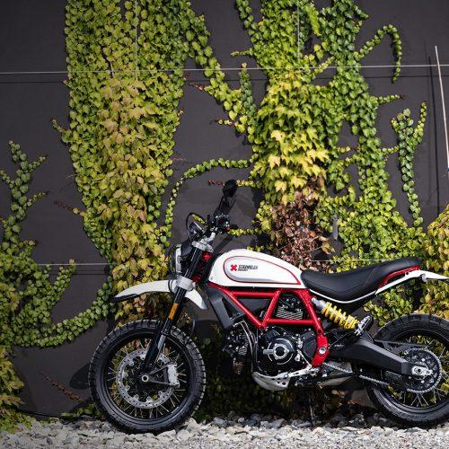 2020 Ducati Scrambler Desert Sled Gallery Image 4